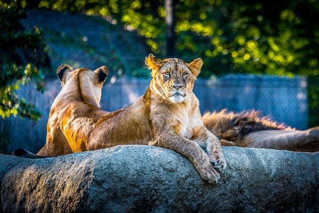 Sveriges bästa zoo och djurparker